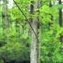 נפילה של עץ מתוך מילים של רדיולאב