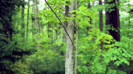 נפילה של עץ מתוך מילים בהשראת רדיולאב